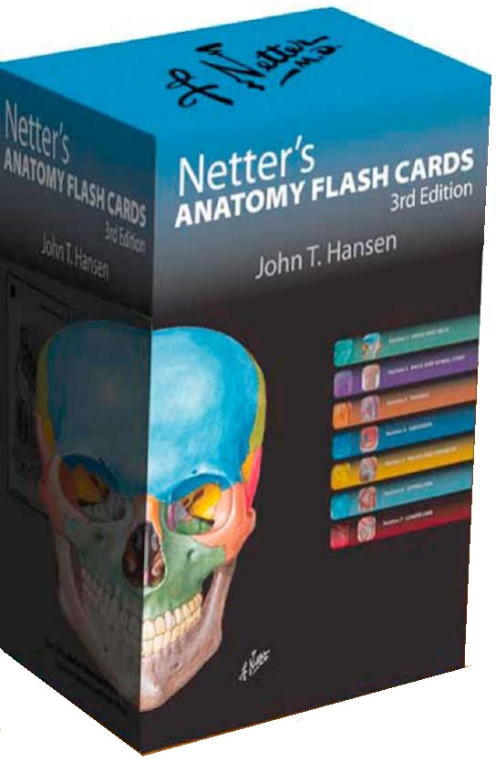 Netters Anatomy Flash Cards 3rd Edition PDF