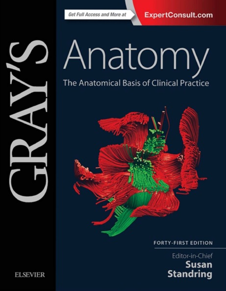 Gray's Anatomy: The Anatomical Basis of Clinical Practice 41st Edition PDF